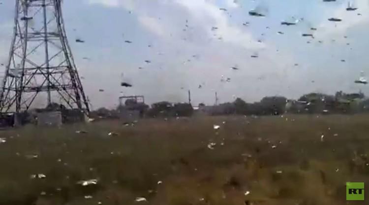 الجراد يغزو جنوب غرب روسيا (فيديو)