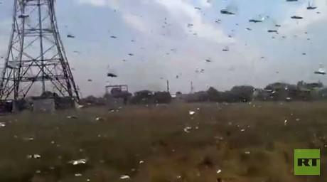 الجراد يغزو  جنوب غرب روسيا