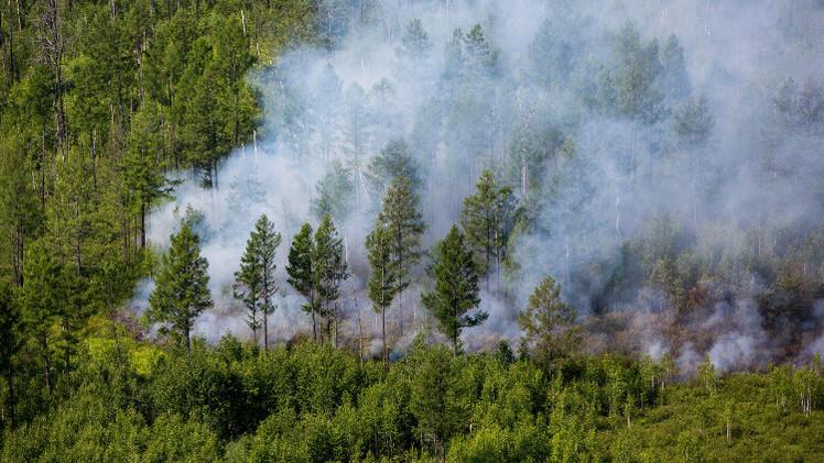 قرابة 150 حريقا تلتهم غابات سيبيريا والشرق الأقصى (فيديو)