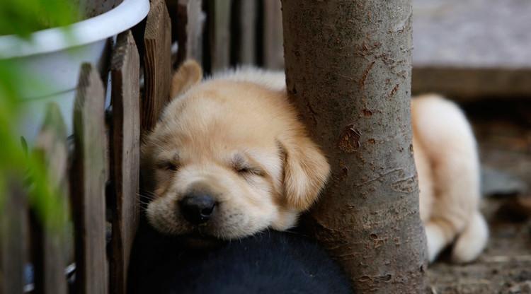 تجارة تهريب الكلاب أكثر ربحا من تهريب المخدرات في بريطانيا