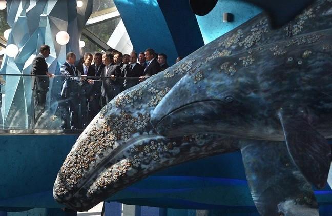 شرق روسيا.. بوتين يتفقد أحد أكبر أحواض الحيوانات البحرية في العالم (فيديو)
