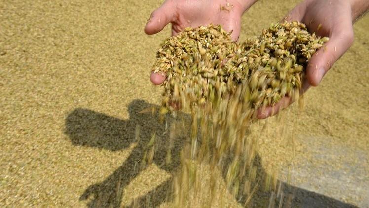 وكالة: روسيا تزيح الولايات المتحدة من سوق الحبوب