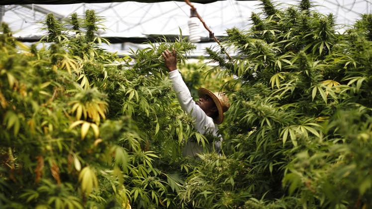 فرنسا.. الشرطة تضبط 7 أطنان من المخدرات في باريس