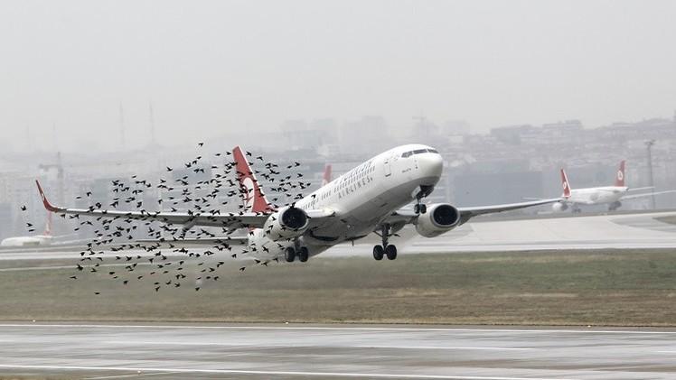 طير يتسبب بهبوط اضطراري لطائرة ايرباص في بروكسل
