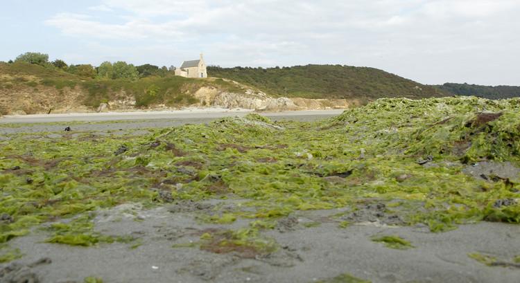 علماء يطورون طاقة كهربائية من الطحالب دعماً للطاقة الخضراء