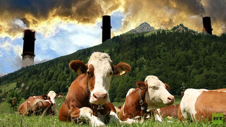 العلماء: إنتاج اللحوم من أسباب الاحترار العالمي