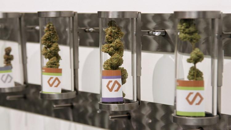 الماريخوانا تباع في صيدليات أوروغواي بداية من 2016