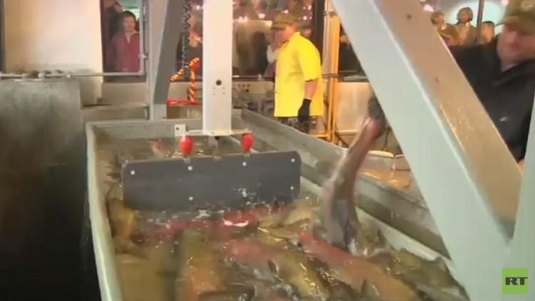 سمك السلمون مهدد بالانقراض في كاليفورنيا