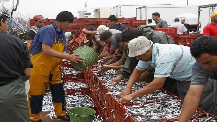 الروس يصطادون أسماك المغرب