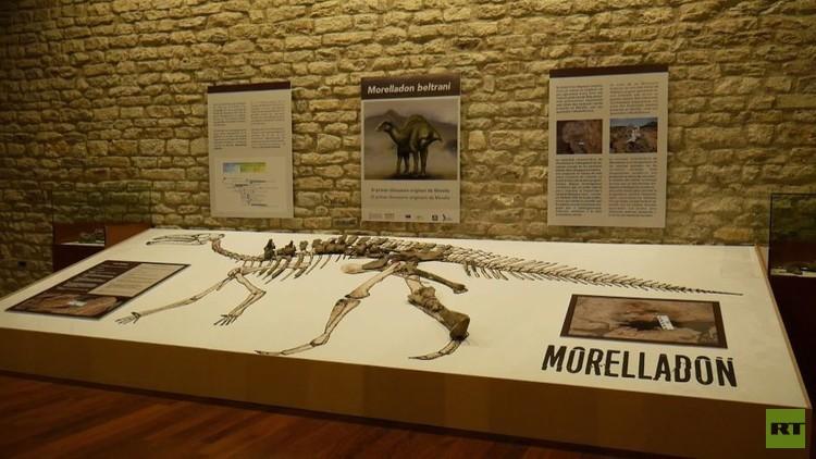 بالفيديو من إسبانيا.. اكتشاف نوع جديد من الديناصورات العشبية