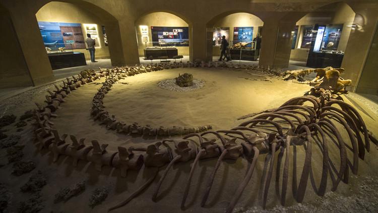 صورة هيكل عظمي لحوت التقطت داخل متحف وادي الحيتان يوم 14 يناير/كانون الثاني 2016