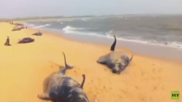 نفوق الحيتان.. لغز يحير العلماء! (فيديو)