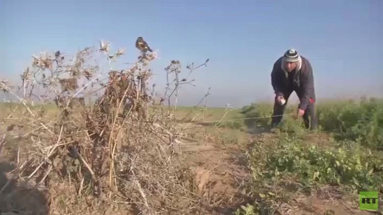 صيد العصافير في غزة.. هواية ثمنها الحياة