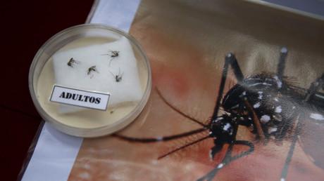 وزارة الصحة البيروانية تعرض على الملأ البعوضات التي تنقل فيروس زيكا بغية تصعيد اليقظة في المجتمع