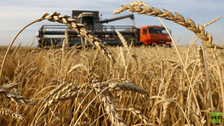 روسيا نحو زيادة صادرات الحبوب بنحو 61% بحلول 2030