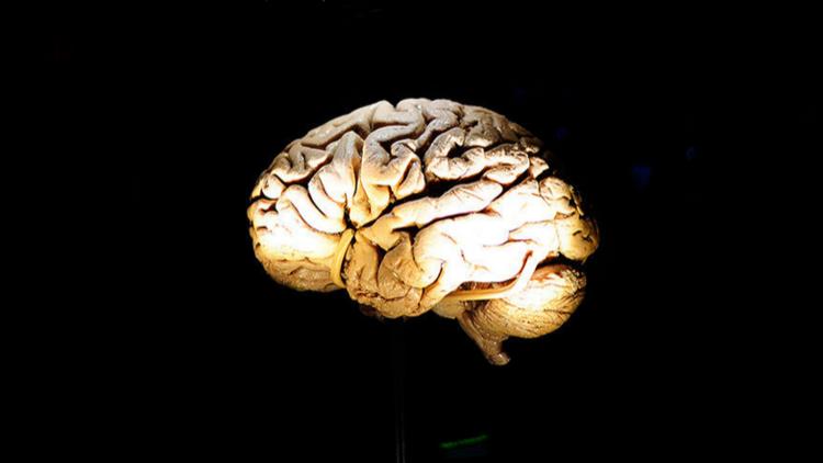 حقائق مذهلة لا تعرفها عن الدماغ