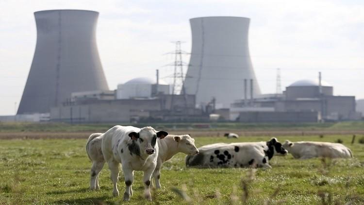حبوب ضد الإشعاع النووي لسكان بلجيكا