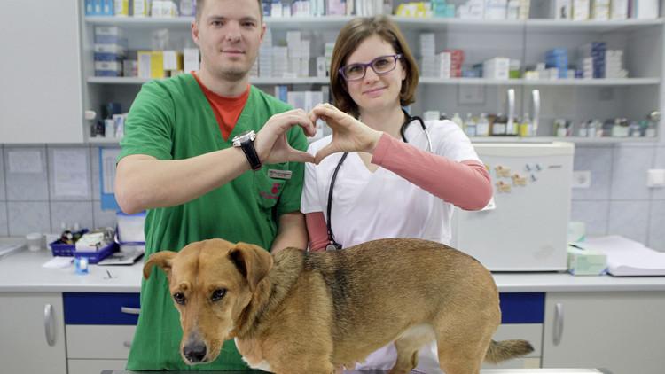 أطباء بيطريون يعبرون عن حبهم لمهنتهم، سلوفينيا، 10 فبراير/شباط 2015
