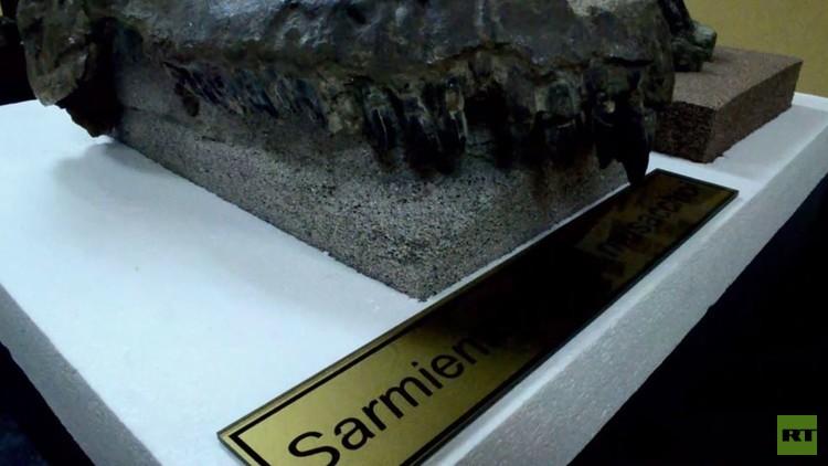 اكتشاف جمجمة ديناصور ضخم  في الأرجنتين