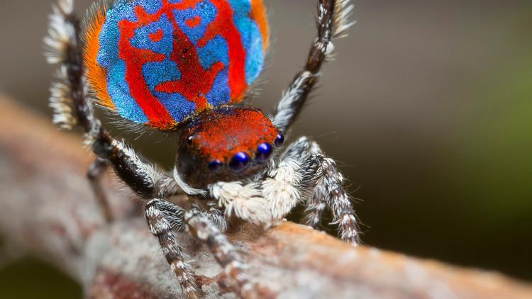 عنكبوتة