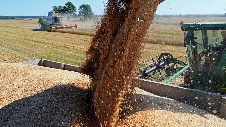 قريبا..القمح الروسي في أسواق فلسطين