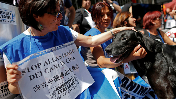 سباق مع الزمن لإنقاذ الكلاب قبل أن تصل إلى موائد الصينيين