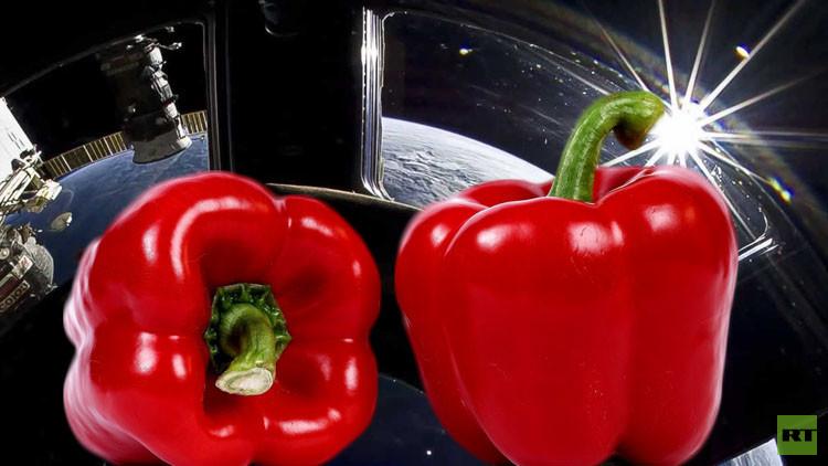 مشروع زراعي قد يقام على متن المحطة الفضائية