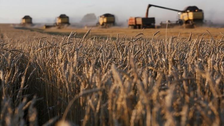 نمو قياسي لصادرات القمح الروسي