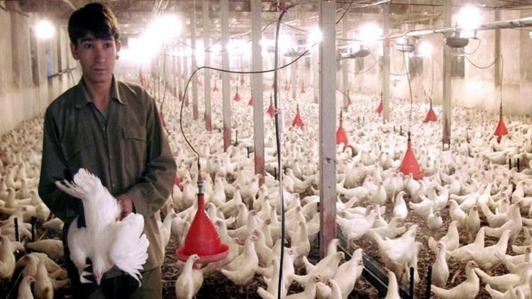 الصين ترفع الحظر عن اللحوم الروسية