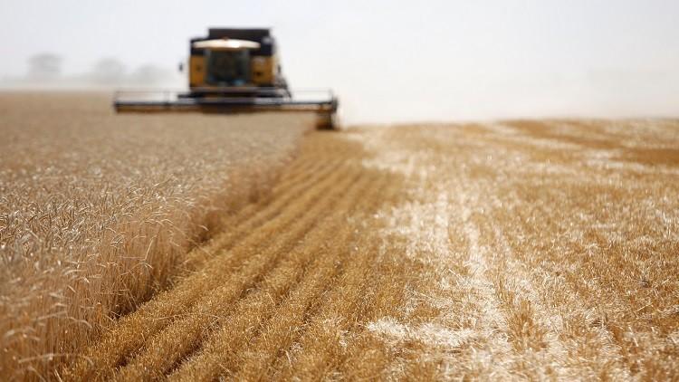 مصر في طليعة مستوردي القمح الروسي