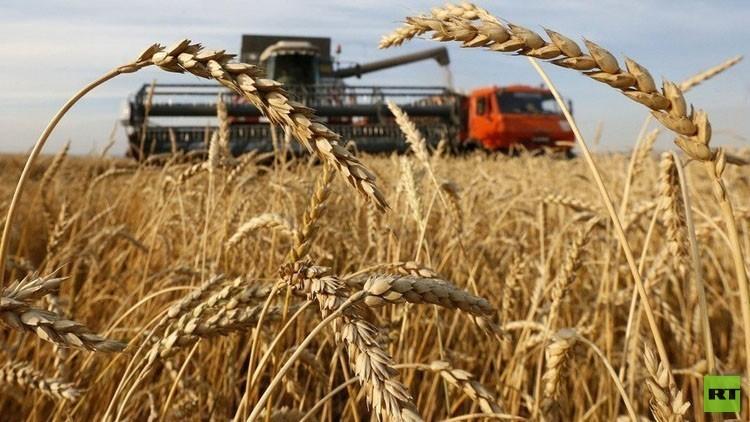 ارتفاع إنتاج روسيا من الحبوب خلال يوليو الجاري