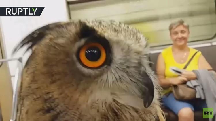 طيور جارحة في مترو أنفاق موسكو