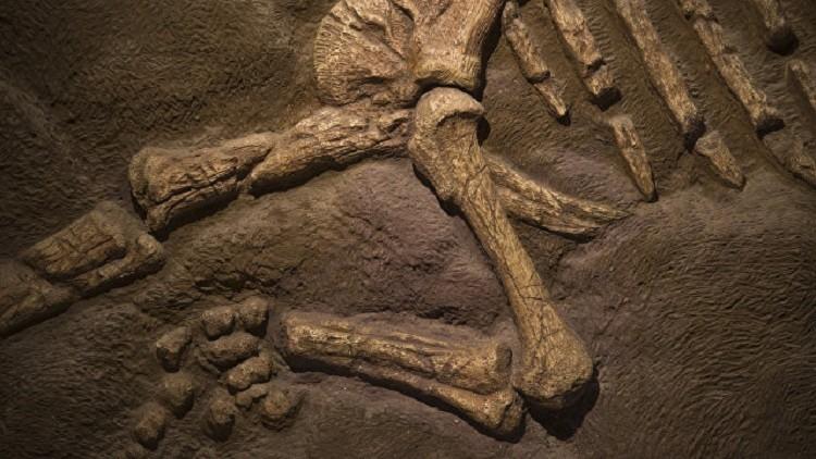 الجمارك الروسية تصادر عظام ديناصور
