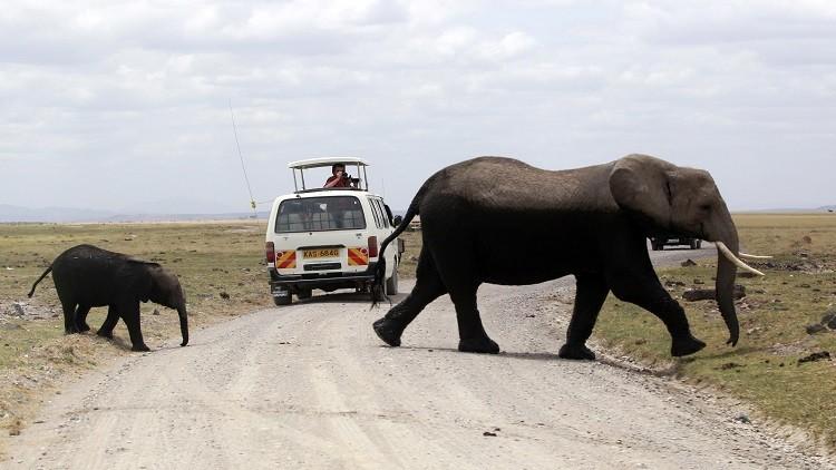 وسيلة غريبة لاتقاء شر الفيلة في تنزانيا! coobra.net