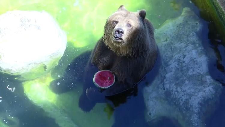 فاكهة مجمدة تساعد الحيوانات في تحمل الحر