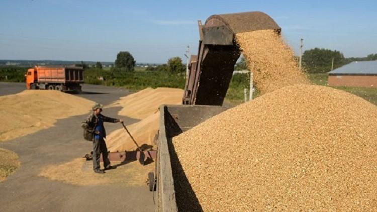 روسيا تلغي رسوم تصدير القمح حتى يوليو 2018