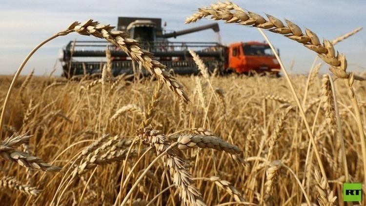 موسكو تلغي رسوم تصدير القمح لمدة عامين