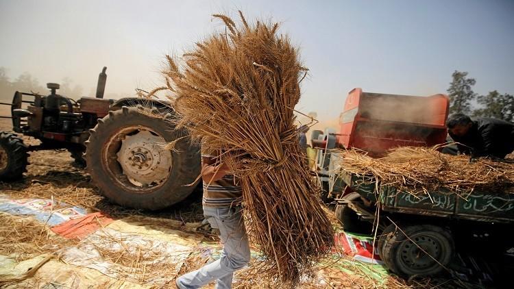 للمرة الثالثة.. الموردون يقاطعون مناقصة مصرية لشراء القمح