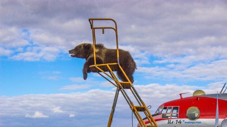 صغير الدب الذي يحب التحليق