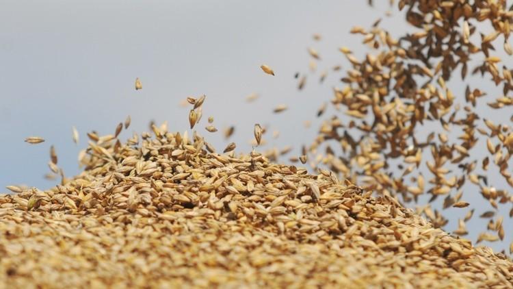 دمشق تستورد مليون طن من القمح الروسي