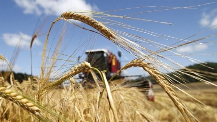 بكين تستعد لاستقبال شحنات الحبوب الروسية