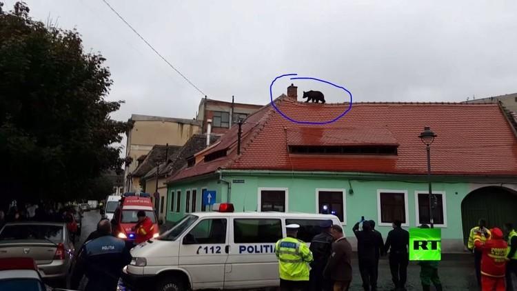 صعود دب إلى سطح مبانٍ سكانية في رومانيا ينتهي بقتله
