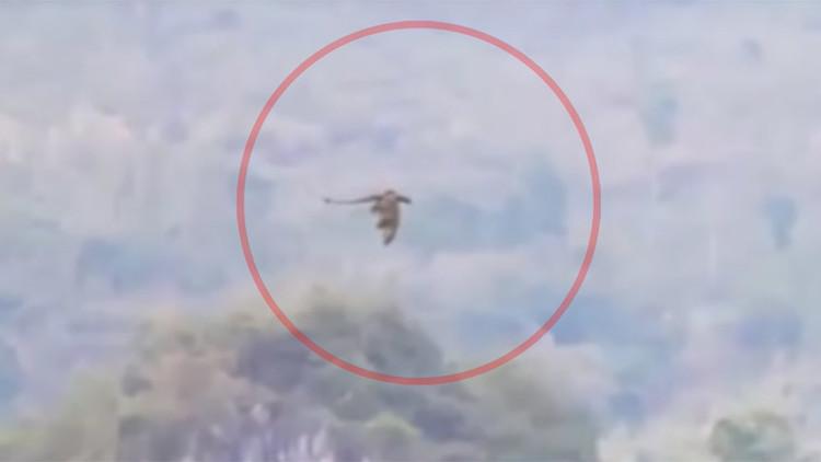 فيديو يظهر تنينا يحلق فوق جبال بالصين