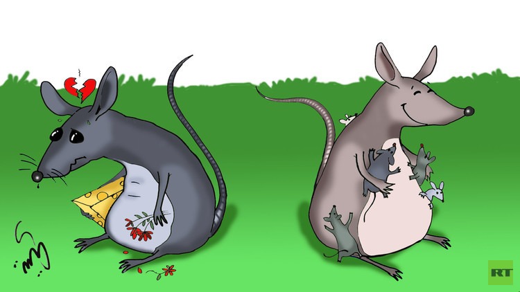 نجاح تجربة إنجاب فئران حية بواسطة الخلايا الجذعية