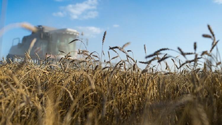 مصر تستأنف شراء القمح الروسي