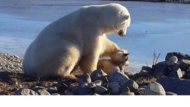 كندا.. دب قطبي يلاطف كلبا كالبشر
