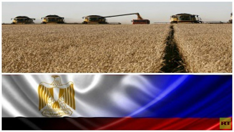 موسكو تنفي إيقاف مصر لشحنة قمح روسي