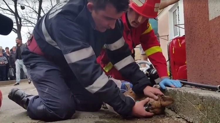 رجل إطفاء روماني يجري تنفسا اصطناعيا لكلب يحتضر