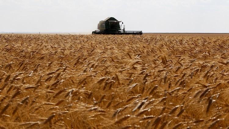 روسيا ستزيد صادرات الحبوب إلى 40 مليون طن