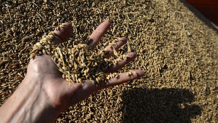 مصر تعلن شرطا لزيادة مشترياتها من الحبوب الروسية